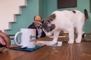 Ideal places to unwind in the company of furry creatures, cat cafés are rapidly ...