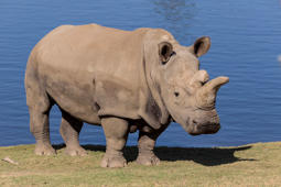 A 2-year-old girl was injured at a Florida zoo during a close-up rhino encounter experience, zoo officials said.