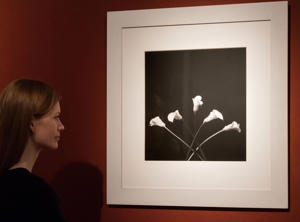 Art collection of Sting and Trudie Styler at Christie's, London, Britain - 17 Feb 2016 Robert Mapplethorpe. Calla Lilies, 1983. Est: £30,000-50,000