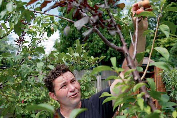 Il a créé l'arbre aux 40 fruits ! Belle collaboration avec notre Créateur ! BBpUocD
