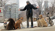Ryan Stewart with some of the many dogs he walks in Long Island City, Queens, on Feb. 5, 2016.