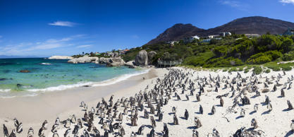 Boulders beach in Simons Town, Cape Town