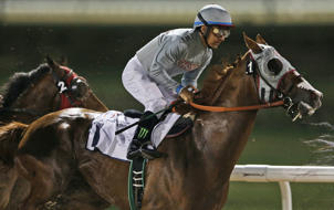 California Chrome., ridden by Victor Espinoza, races during a $150,000 price money race at the Meydan Racecourse in Dubai, United Arab Emirates on Feb. 25, 2016.
