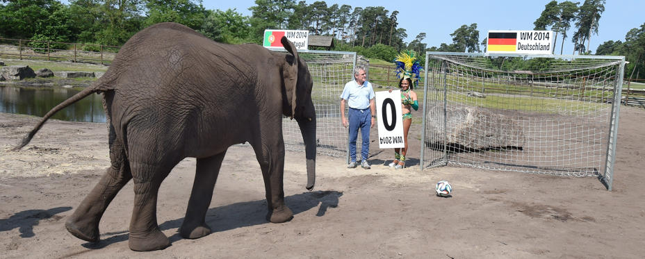 German football legend Sepp Maier (C) and Brazilian Noemia watch elephant Nelly play the ball into the German goal at the wild life Serengeti Park in Hodenhagen, central Germany on June 4, 2014, an event to predict the outcome of the upcoming World Cup Championship 2014 football match Portugal vs Germany on June 16.