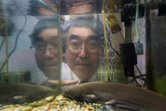 Professor Naoyuki Yada, in his research laboratory with his catfish he uses to try and predict imminent seismic activity, at the Kanagawa Institute of Technology on April 20, 2012 in Atsugi, Japan. P