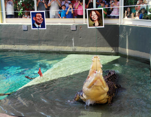 In this Thursday, Aug. 19, 2010 photo, a saltwater crocodile named Dirty Harry snaps up a piece of chicken attached to a caricature of Australian Prim Minister Julia Gillard, right, while turning down the morsel attached to the image of opposition leader, Tony Abbott, in Darwin, Australia.