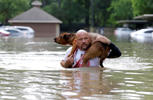 Louis Marquez carries his dog Dallas through floodwaters after rescuing the dog from his flooded apartment Tuesday, April 19, 2016, in Houston. Storms have dumped more than a foot of rain in the Houston area, flooding dozens of neighborhoods.