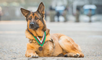 Above and Beyond – the bravest military animals remembered
