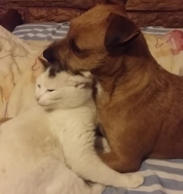 Cat and dog can't deny love