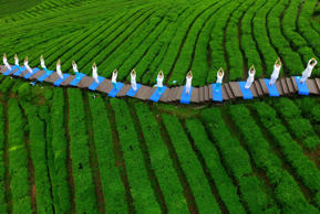 People perform yoga at a tea culture park to promote the tea there, in Enshi, Hubei province, April 24, 2016.