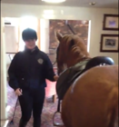 Woman brings a pony into a pub