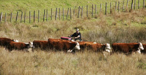 Livestock firm flags proposal to split