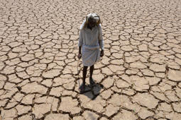 File: This file photo taken on April 25, 2016 shows an Indian farmer posing in his dried up cotton field at Chandampet Mandal in Nalgonda, east of Hyderabad, in the southern Indian state of Telangana.