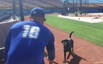 Baseball player trains dogs