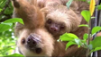 Sloths hanging out