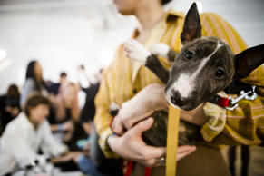 A puppy backstage at the Creatures of Comfort fashion show at the Fall 2016 New York Fashion Week on February 11, 2016 in New York City.