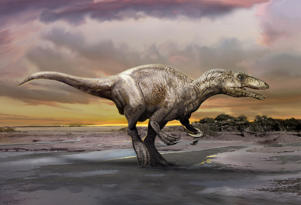 An artist's rendering of a carnivorous dinosaur unearthed in Argentina shows Murusraptor barrosaensis, which lived about 80 million years ago during the Cretaceous Period, measured about 21 feet (6.5 meters) long that prowled Patagonia, although fossils of relatives have been discovered in Australia and Japan.