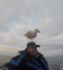 Seagull lands on a man's head