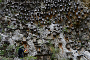 A beekeeper checks beehives on the cliff in Shennongjia nature reserve, in central China's Hubei province on 27th April 2015. (Photo by Jie Zhao/Corbis via Getty Images)