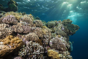 'Hard Coral Reef, Sanganeb, Red Sea, Sudan'