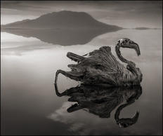 Lake Natron in Tanzania is both morbid and magnificent. Its salt content and highly alkaline water transforms any animals that dare enter it into stone.Pinterest