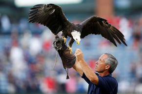 A bald eagle is shown on the field before a game between the Phillies and Braves in the first inning at Turner Field on Friday in Atlanta.