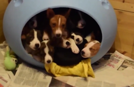 We've gathered our cutest puppies into one amazing compilation. Enjoy!