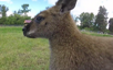 Wallaby wants GoPro lesson