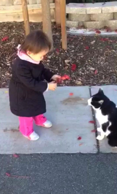 Girl tries to befriend a cat