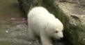 This adorable polar bear now has a name