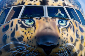 VLADIVOSTOK, RUSSIA - MARCH 3, 2017: Rossiya Airlines Boeing 777-300 with a face of the endangered Amur leopard painted on its nose cone arrives at Vladivostok International Airport. Yuri Smityuk/TASS (Photo by Yuri Smityuk\TASS via Getty Images)