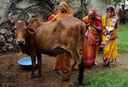 Women worship a cow to seek blessing for their male child during Bach Baras festival in Ajmer
