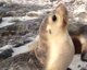 Adorable sea lion plays on beach