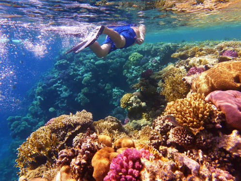 Slide 1 of 23: Man swimming in the sea water near colorful coral reef