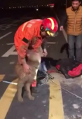 Rescued retriever 'thanks' firefighter