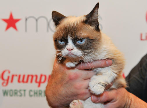 Slide 1 of 42: SAN FRANCISCO, CA - NOVEMBER 21: Grumpy Cat appears at Lifetime's Grumpy Cat's Worst Christmas Ever event at Macy's Union Square on November 21, 2014 in San Francisco, California.