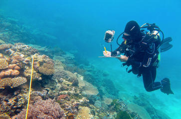 Supplied image of researcher Grace Frank completing bleaching surveys along a transect line on an area known as One Tree Reef, in the Capricorn Group of Islands, on the Great Barrier Reef in Australia, made available to Reuters on November 29, 2016.