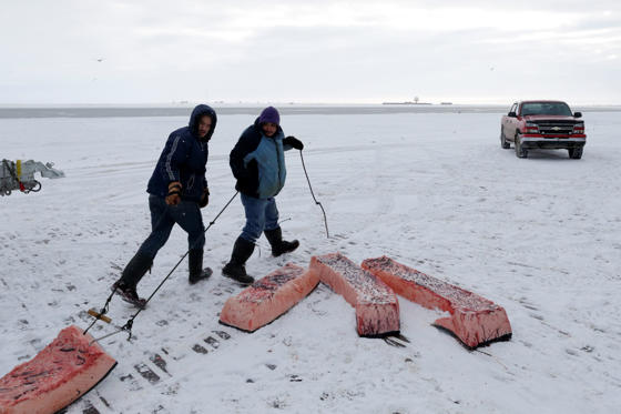 In this Oct. 7, 2014 file photo, men haul sections of whale skin and blubber, known as muktuk, as a bowhead whale is butchered in a field near Barrow, Alaska. The environment is changing and the Inuit, who consider themselves a part of it, want measures taken to protect their culture. (AP Photo/Gregory Bull, File)