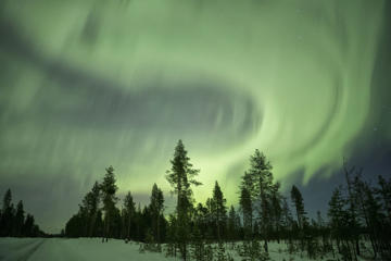 Northern lights over pine forest near Kiruna, Sweden.