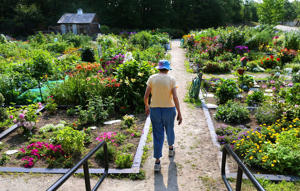 A resident walks through the garden at Linden Ponds Retirement Community.