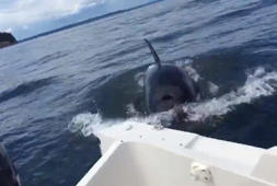 Killer whale nearly jumps into boat off B.C. coast