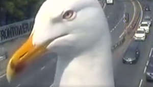 Seagull 'poses' for traffic camera in London
