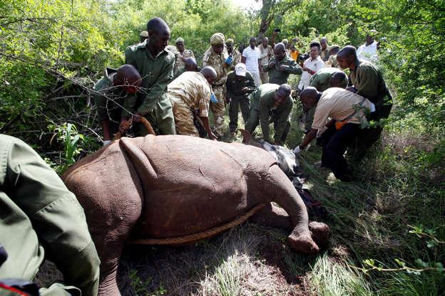 The Unprecedented Plan to Save the Sumatran Rhino