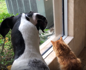 Squirrel teases dog and cat through glass window