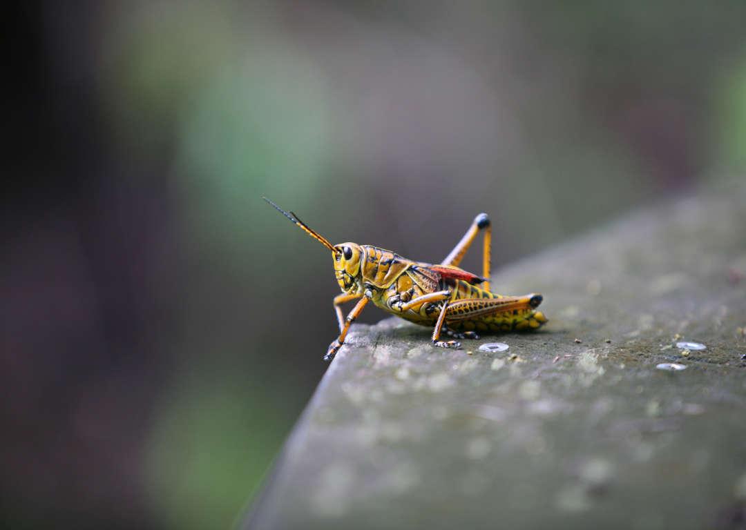 Comment Éloigner Les Mouches À L Extérieur comment éloigner les insectes sans pesticides?