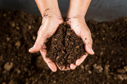 Washington becomes first state ever to allow human composting