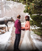 Moose crashes wedding in Rocky Mountain National Park