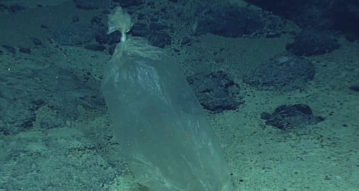Image result for Deepest ever dive finds 'plastic bag' at bottom of Mariana Trench