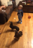 Baby plops on floor after hearing mom order their dogs to sit