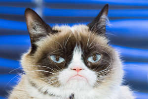 WATCH WHAT HAPPENS LIVE -- Pictured: Grumpy Cat -- (Photo by: Charles Sykes/Bravo/NBCU Photo Bank via Getty Images)